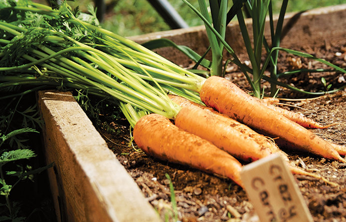 Plan where your vegetables will be best suited in your garden.